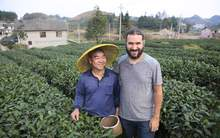 Moychay ocean%20of%20tea%20in%20meitan%20guizhou%20green%20tea 64